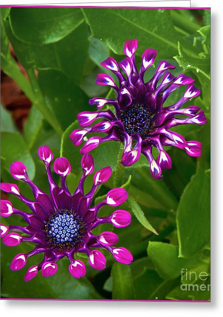 Cool Flowers Greeting Card by Timothy J Berndt