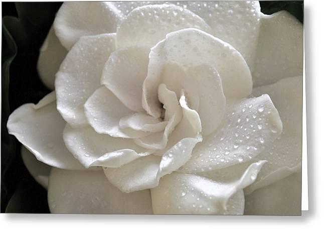 Cool Gardenia Greeting Card