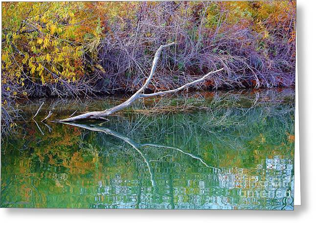 Cool Reflections Greeting Card by Li Newton