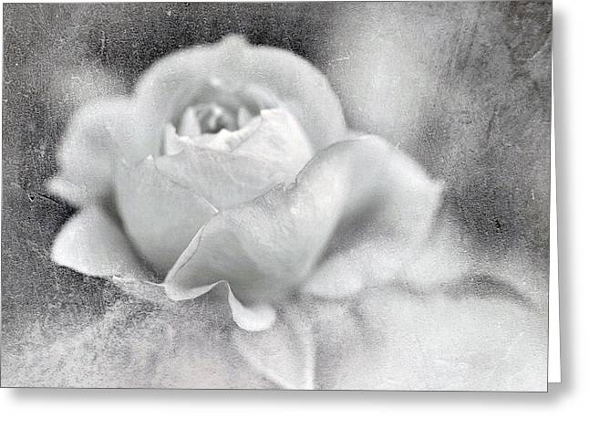 Greeting Card featuring the photograph Cool Rose by Annie Snel
