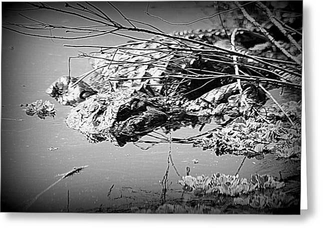 Cooling Off  B W Greeting Card by Sheri McLeroy