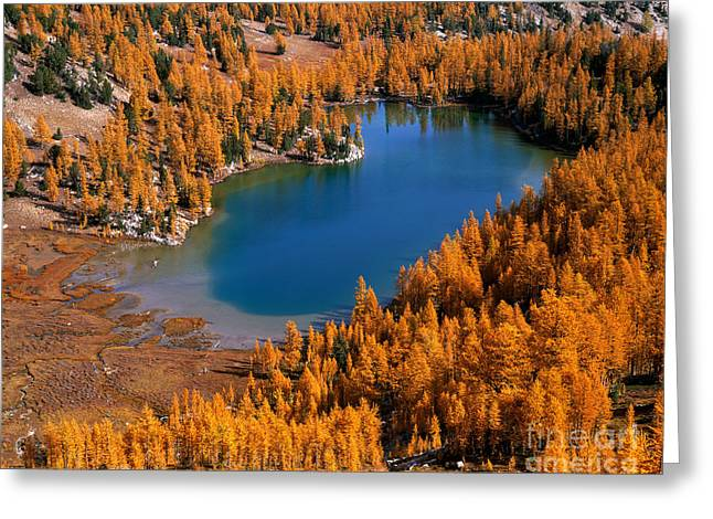Cooney Lake Surrounded By Larch Trees Greeting Card by Tracy Knauer