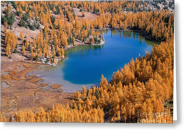 Cooney Lake Larches Greeting Card
