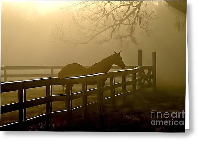 Coosaw Early Morning Mist Greeting Card
