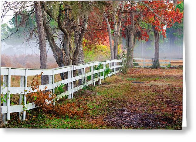 Coosaw Horse Fence Greeting Card by Scott Hansen
