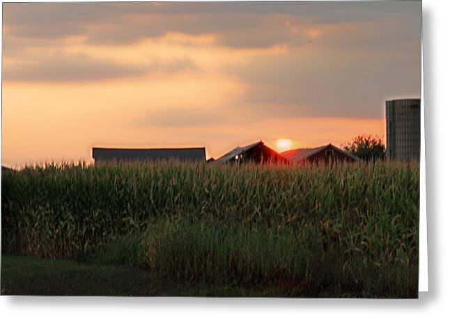 Coountry Sunset Greeting Card by Victoria Sheldon
