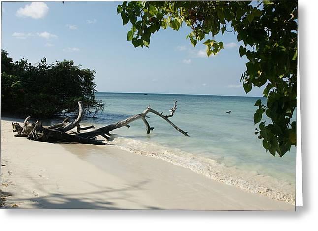 Coral Beach Greeting Card by Olaf Christian