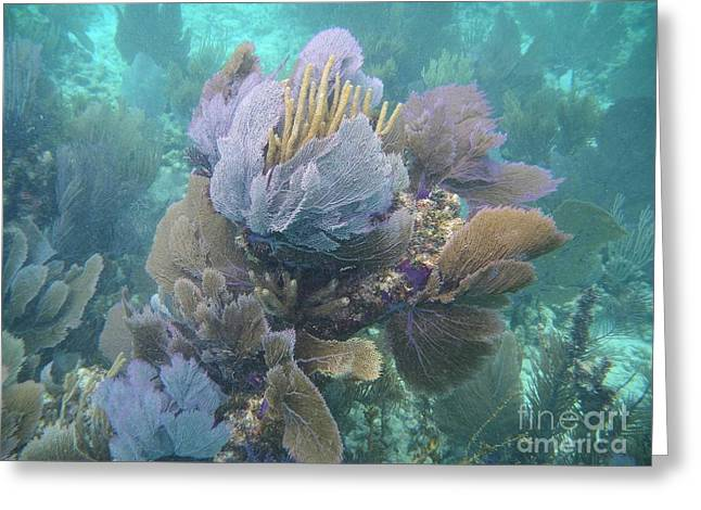Coral Cluster Greeting Card by Adam Jewell