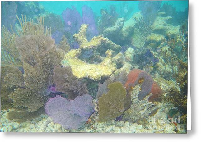 Coral Garden Greeting Card by Adam Jewell