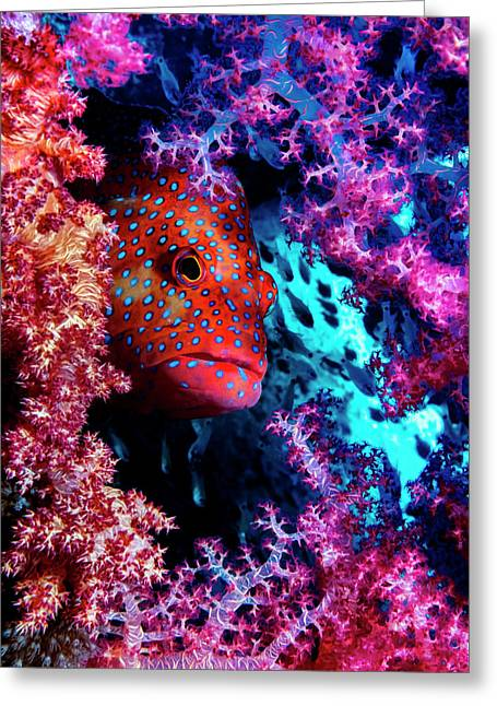 Coral Hind Greeting Card