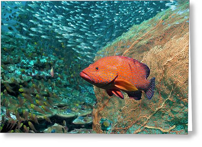 Coral Hind Over A Coral Reef Greeting Card