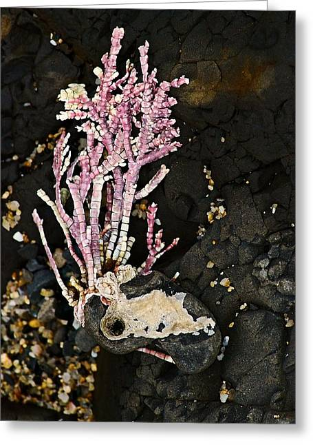 Greeting Card featuring the photograph Coral II  by Bob Wall