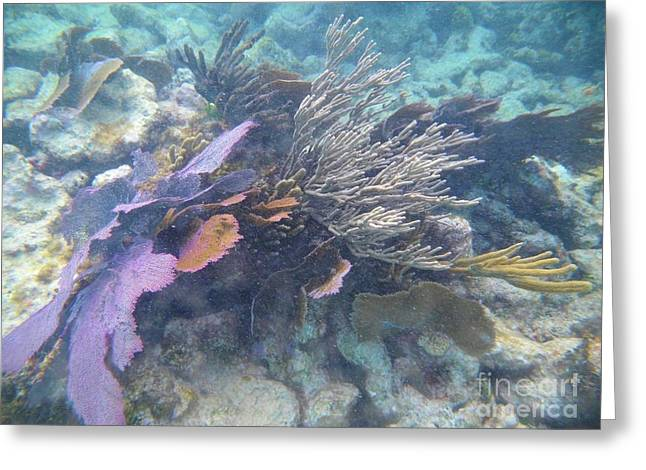 Coral Mix Greeting Card by Adam Jewell