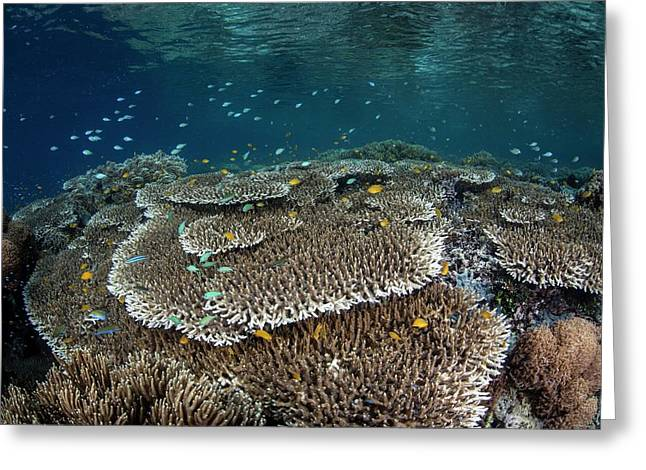 Coral Reef Greeting Card by Ethan Daniels