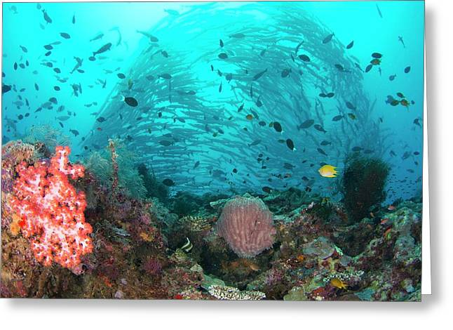 Coral Reef With Schooling Barracuda Greeting Card