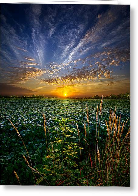 Coraline Greeting Card by Phil Koch