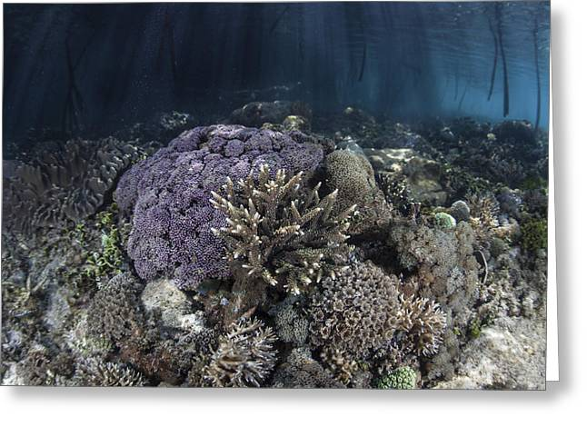 Corals Grow Along The Edge Greeting Card by Ethan Daniels