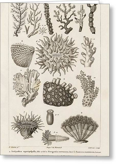Corals Greeting Card by King's College London