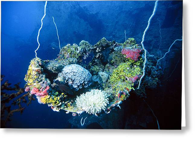 Corals On Ship Wreck Greeting Card