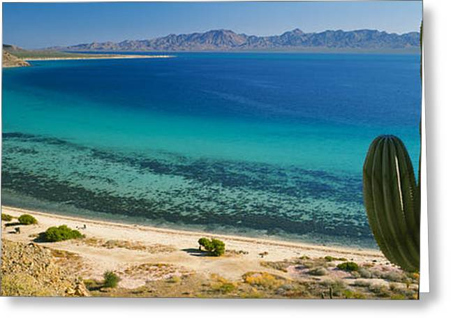 Cordon Cactus On The Coast, Bay Of Greeting Card