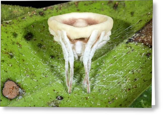 Cordyceps Fungus Parasitizing A Spider Greeting Card