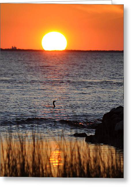 Core Sound Sunset Greeting Card by James Lewis