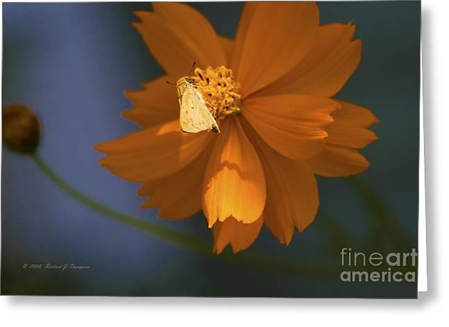 Coreopsis Greeting Card