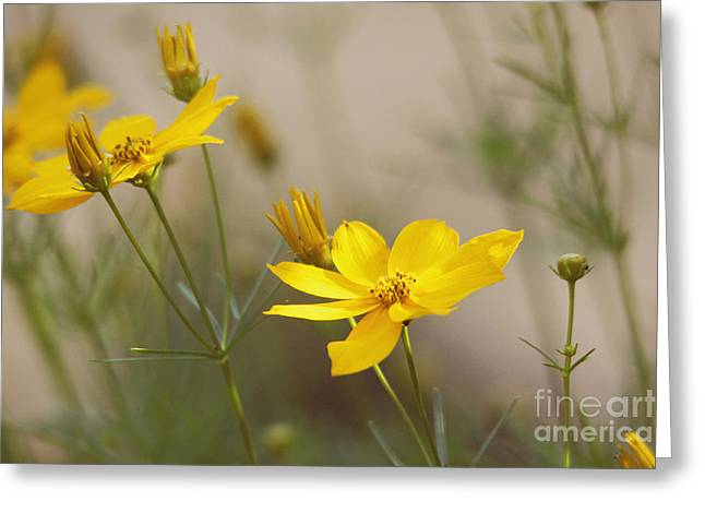 Greeting Card featuring the photograph Coreopsis by Trina  Ansel