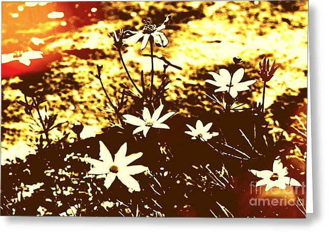 Greeting Card featuring the photograph Coriopsis by Denise Tomasura