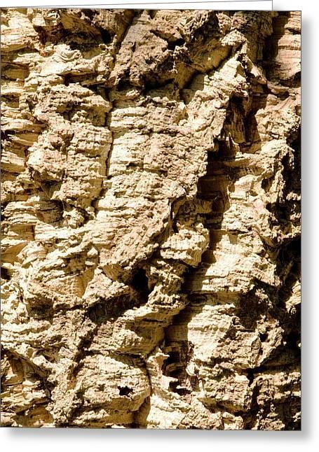 Cork Oak Bark (quercus Suber) Greeting Card by Adrian Thomas
