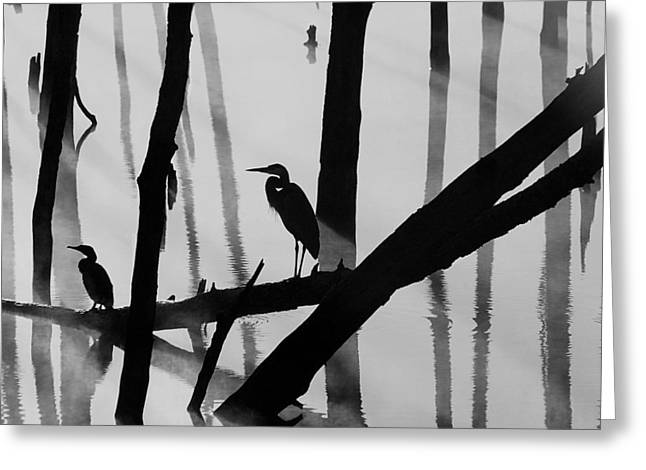Cormorant And The Heron  Bw Greeting Card