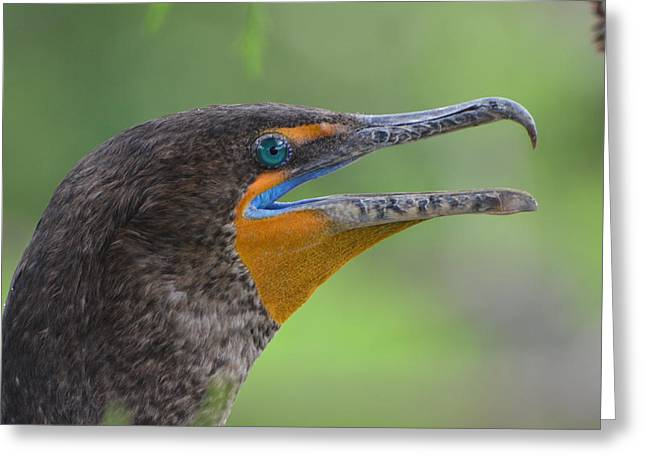 Cormorant Close Up Greeting Card by Jodi Terracina