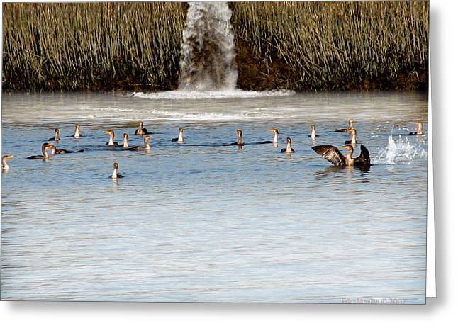 Cormorant Convention Greeting Card by EricaMaxine  Price