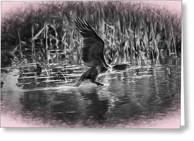 Cormorant Imp Oct 2014- Flying Cormorant Greeting Card by Leif Sohlman