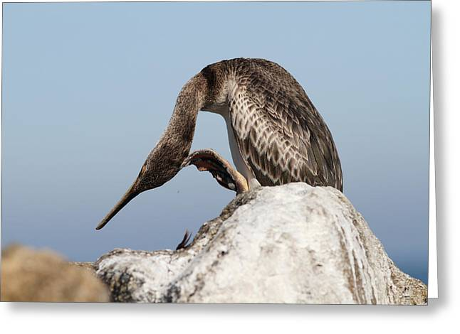 Cormorant On A Rock Greeting Card