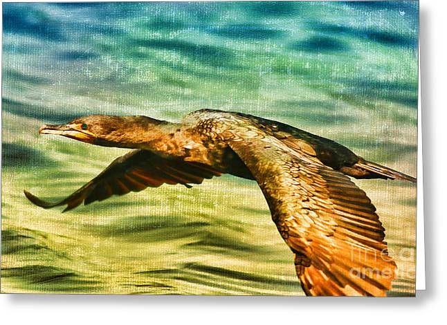Cormorant On The Move Greeting Card by Deborah Benoit
