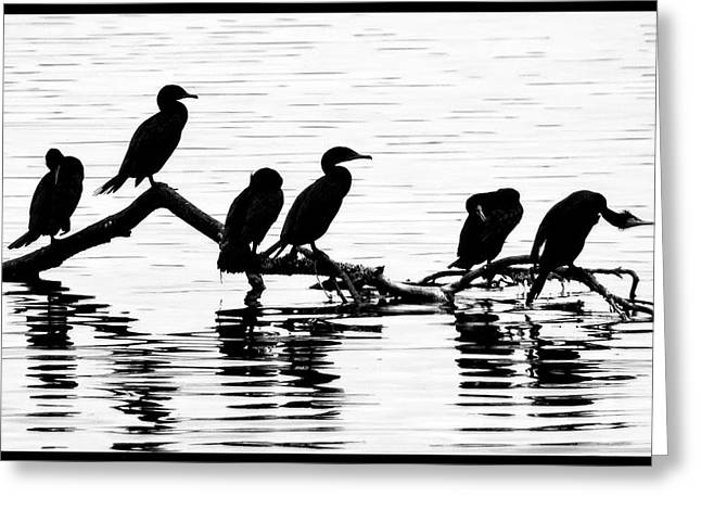 Greeting Card featuring the photograph Cormorant Silhouettes by Geraldine Alexander
