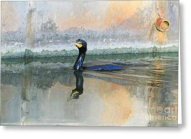 Cormorant Swim Greeting Card