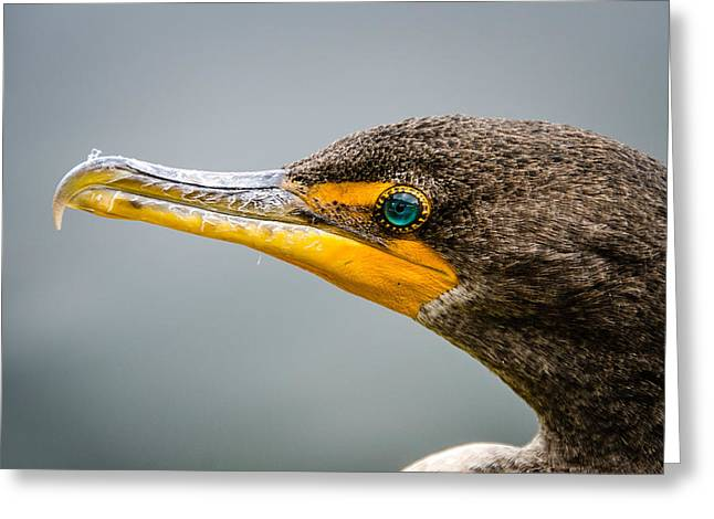 Cormorant's Jewel Greeting Card