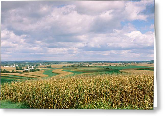 Corn And Alfalfa Fields, Green County Greeting Card by Panoramic Images