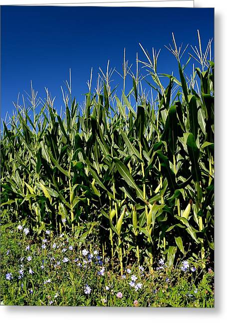 Corn And Wildflowers Greeting Card
