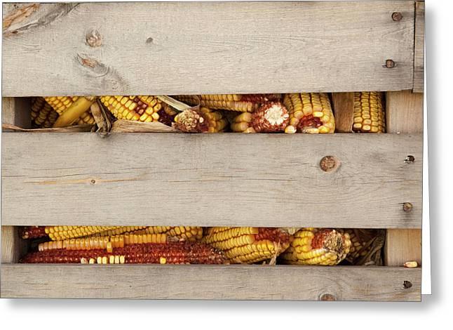 Corn Cobs In Corn Crib At Indiana State Greeting Card