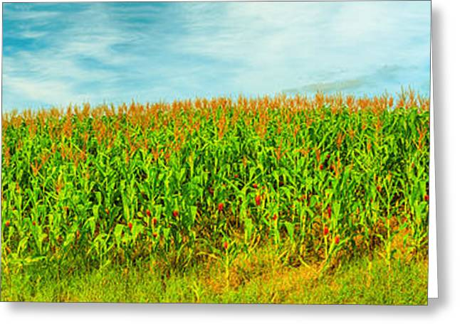 Corn Crop Greeting Card by MotHaiBaPhoto Prints