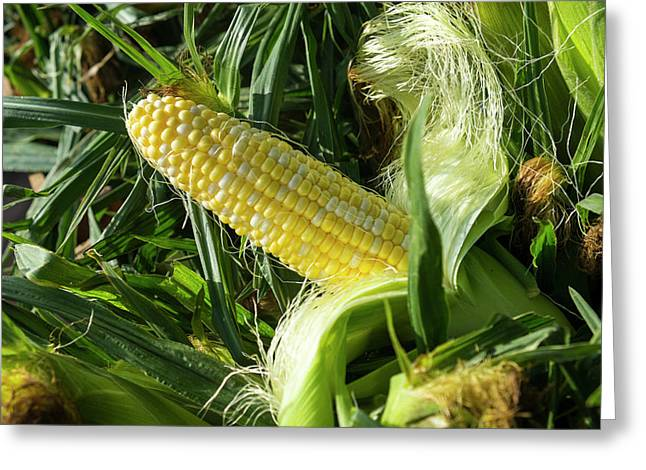 Corn For Sale At A Farmers Market Greeting Card by Julien Mcroberts