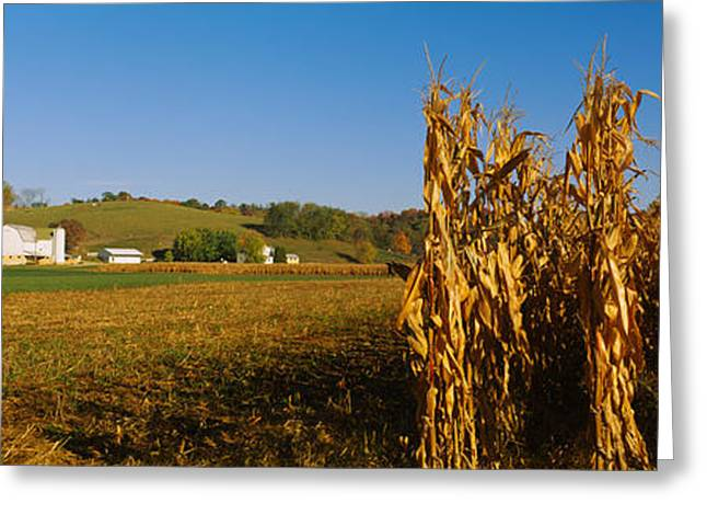 Corn In A Field After Harvest Greeting Card by Panoramic Images