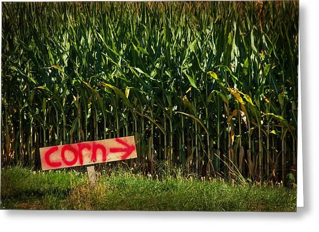 Corn Greeting Card by Karol Livote
