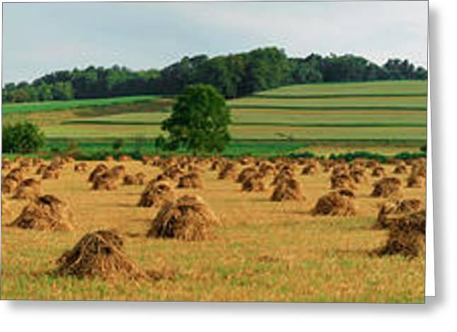 Corn Shocks, Amish Country, Ohio, Usa Greeting Card