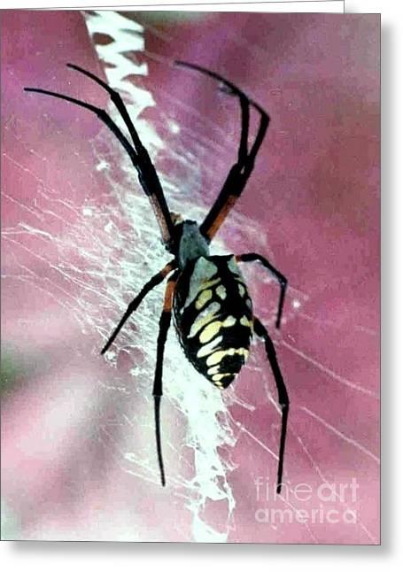 Corn Spider Argiope Auratia Greeting Card by Michael Hoard