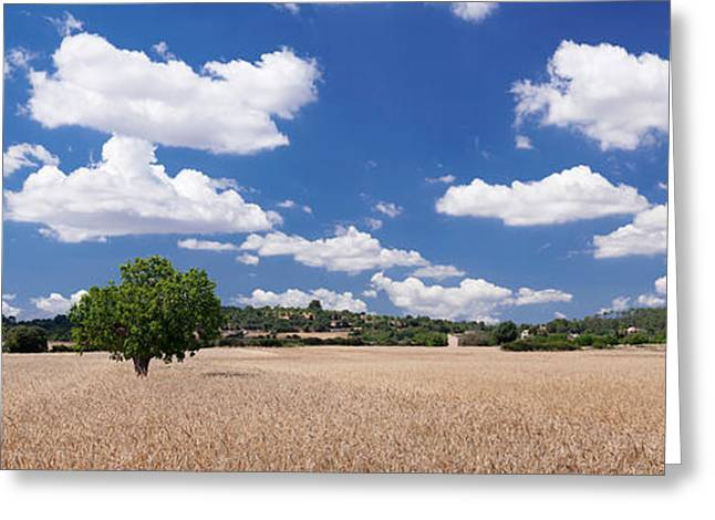 Cornfield And Finca Near Sineu Greeting Card by Panoramic Images