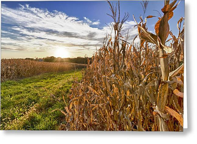 Cornfield At Sunset Greeting Card